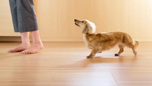 愛犬の足腰にやさしいペット用床材|愛知県春日井市でペットリフォームならライフハウジングへ